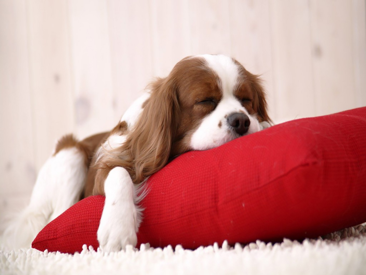 séjour à Gordes avec votre chien
